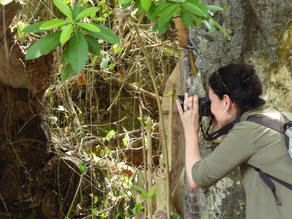 Els Banda fotograferen